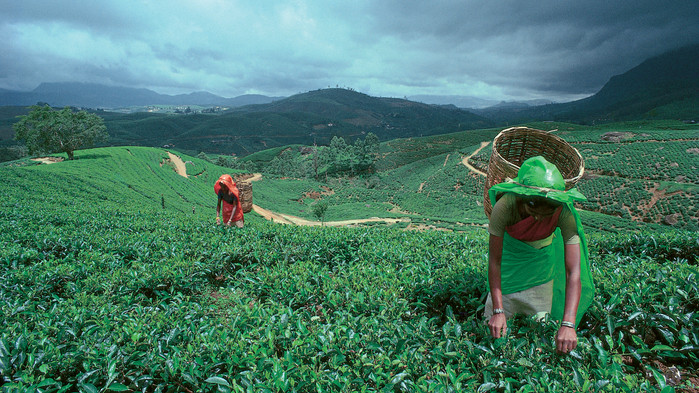 Teplukkere i høylandet