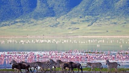 Ngorongorokrateret - også kalt Edens hage - med sitt mangfold av dyr