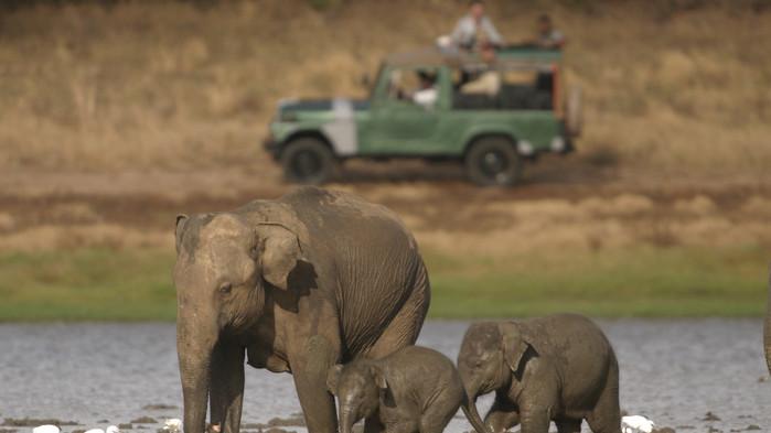 Elefanter i Yala nasjonalpark