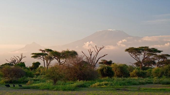 Ved klart vær i Amboseli viser Afrikas høyeste fjell seg- Kilimanjaro