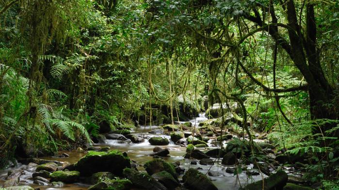 I Ranomafana nationalpark gjøres en guidet vandring.