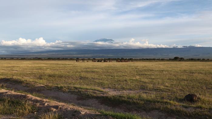 Amboseli med Kilimanjaro i bakgrunnen