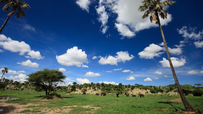 Tarangire nasjonalpark.