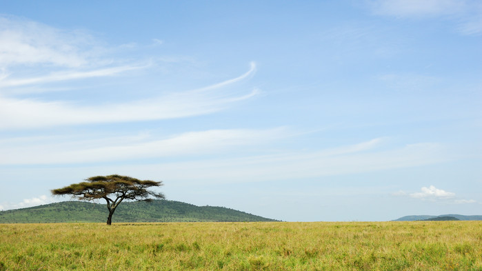 Serengetis vidstrakte savanne